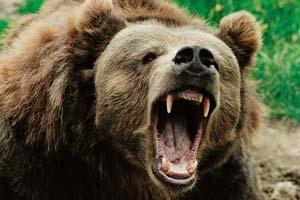 h6MyTVnL Страшные истории Якутии: Медведь