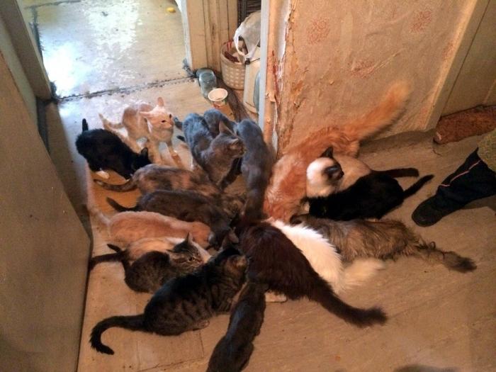 2MsMidyj В Якутске 85-летняя женщина содержит в квартире 18 кошек и двух собак. Пенсионерке нужна помощь