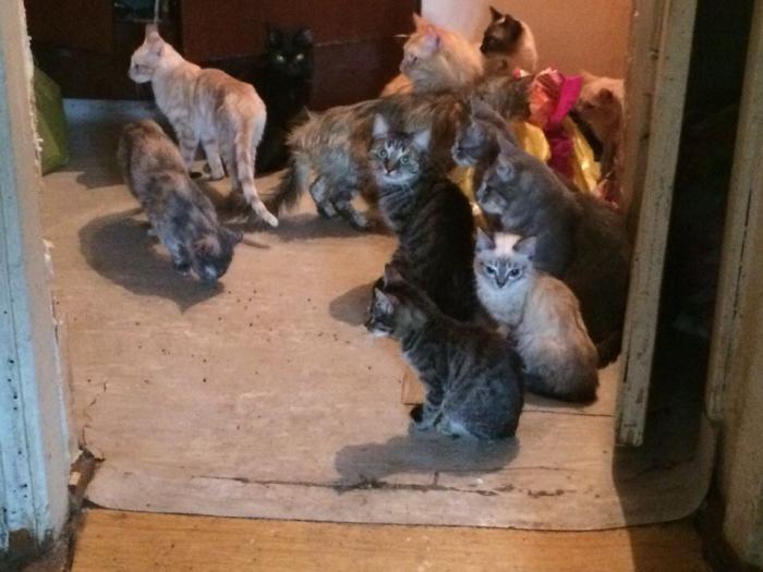 5zCjvwOq В Якутске 85-летняя женщина содержит в квартире 18 кошек и двух собак. Пенсионерке нужна помощь
