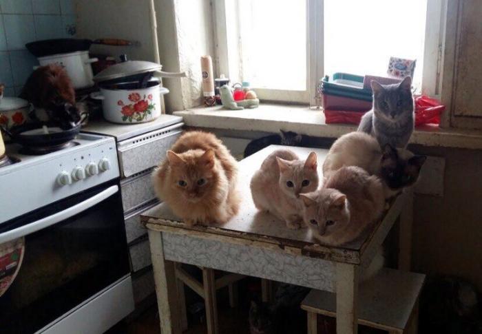 GUJ36jmk В Якутске 85-летняя женщина содержит в квартире 18 кошек и двух собак. Пенсионерке нужна помощь
