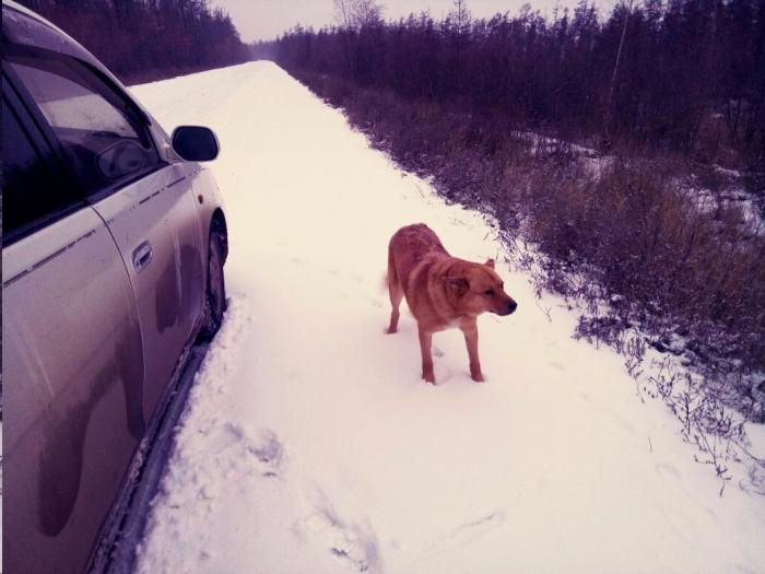 TWgbo0Vz В Якутии собака спасла жизнь своему хозяину