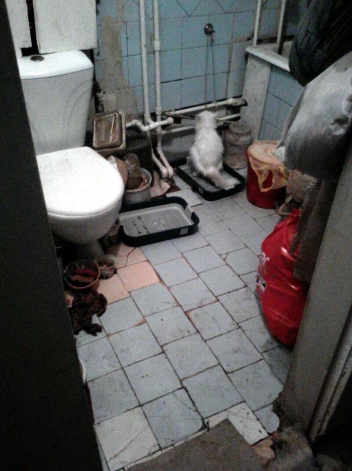 s2cV4ojz В Якутске 85-летняя женщина содержит в квартире 18 кошек и двух собак. Пенсионерке нужна помощь