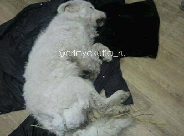 y3SK8X6T В Якутске пьяный мужчина облил водой собаку и оставил умирать на улице