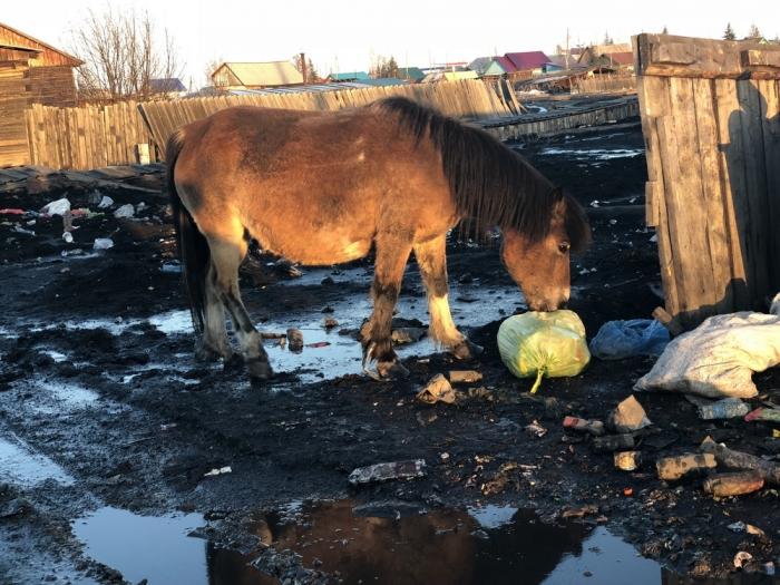 eo9sBAuM В Якутии некогда процветавший поселок тонет в фекальных водах