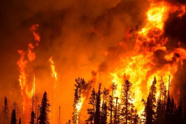 Всемирный фонд дикой природы (WWF) России начал сбор средств на тушение пожаров в Якутии